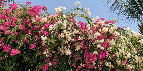 Decorate the Exterior of Your Home by Using Beautiful Vines